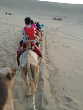 Camel ride to end the trip