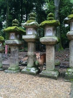 Nara Park / Kasuga-taisha