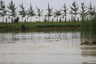 Sand Lake's Bird Sanctuary