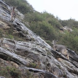Spotted some red deers (protected animals) in the Helan Mountains